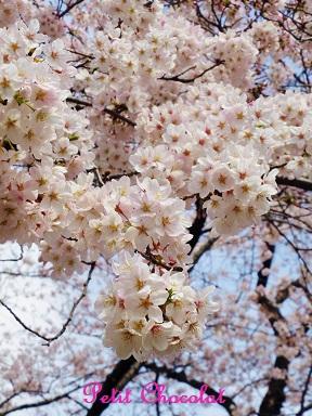 chidorigafuji1.jpg