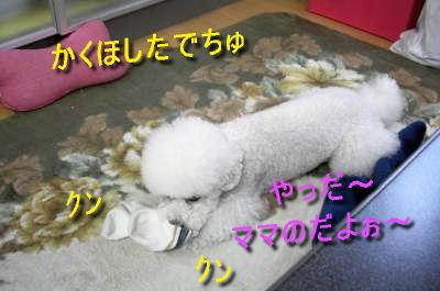 CIMG5246_ssc.jpeg