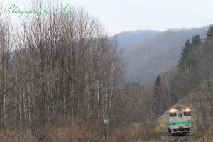 白樺の林とセットで