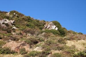石灰石と樹木の融合