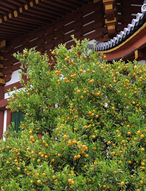 興福寺17
