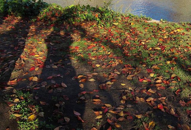 平和公園の秋6