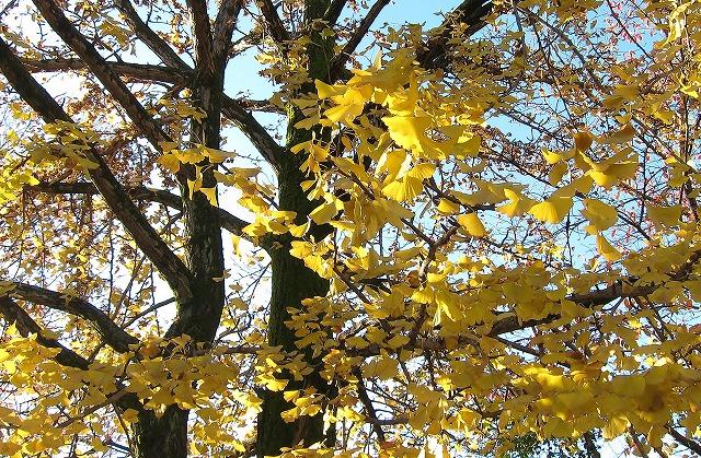 平和公園の秋9