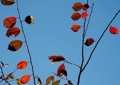 平和公園の秋12