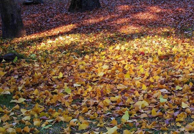 平和公園の秋10