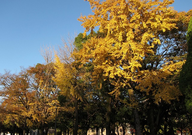 平和公園の秋13