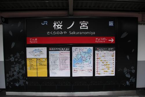 sakurasa1.jpg