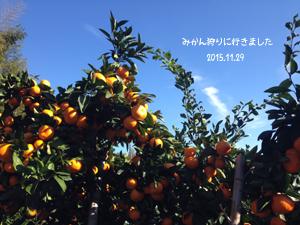 IMG_5288-.jpg