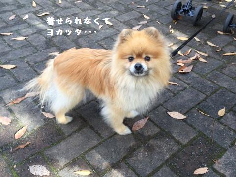 ashimoto2.png