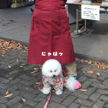 ashimoto6.png