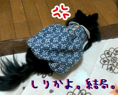 2015-11-26_10_38684.jpg