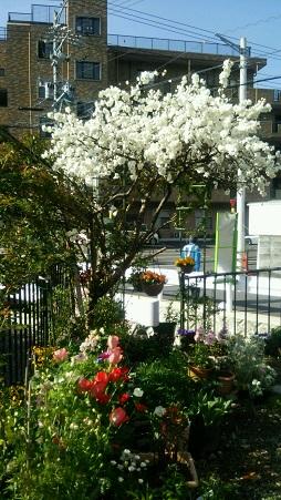 2016春の庭1