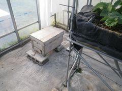 [写真]本圃ハウスに到着したばかりのミツバチの巣箱