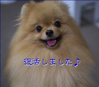 blog20151028-1.jpg
