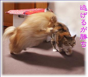 blog20151028-3.jpg
