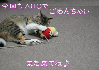 blog201511-s1.jpg