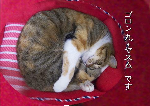 blog20151120-3.jpg