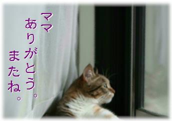 blog20151122-1.jpg
