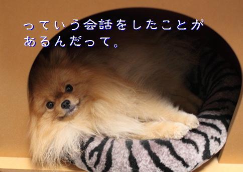 blog20151206-2.jpg