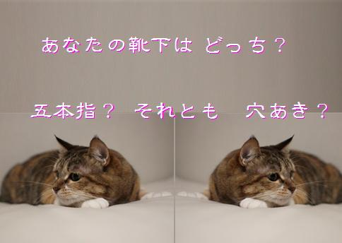 blog20151206-3.jpg