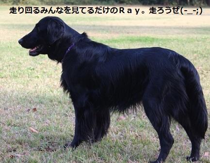オータム (13)