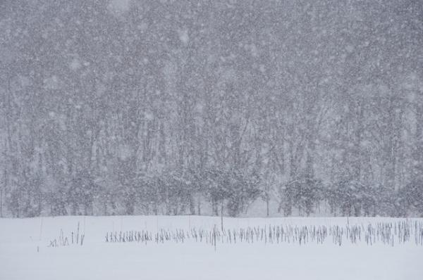 春の雪@@@
