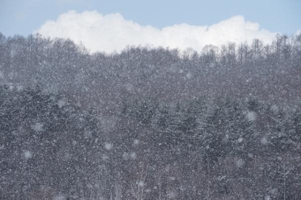 春の雪@@@@