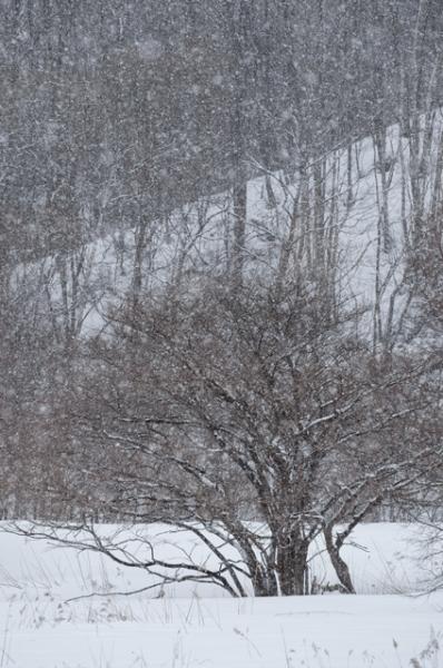 春の雪@@@@@