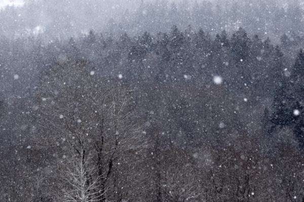 春雪シューパロ