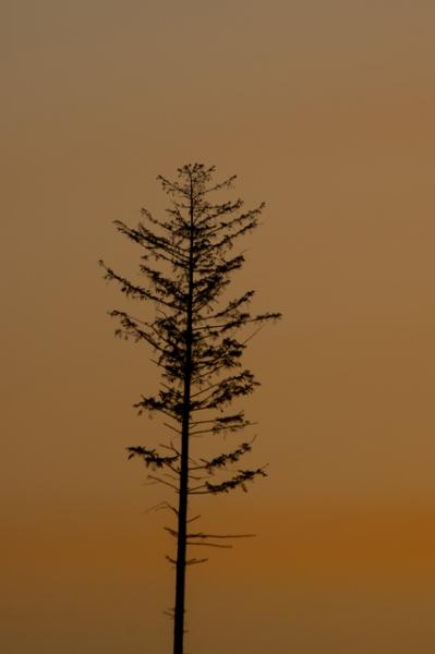 1本立ち木