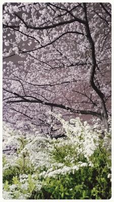 s16-04-03-21-43-05-708_deco.jpg