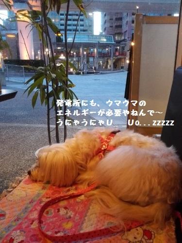 IMG_20160317_181350 (375x500)