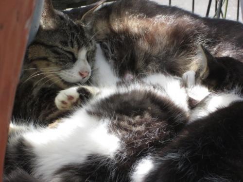 ママちゃんと子猫
