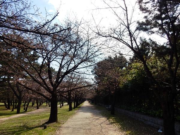 桜のトンネルのところ