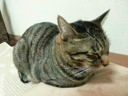だるま猫1