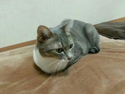 だるま猫2