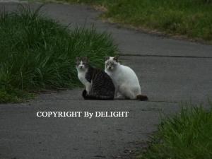 どこかの猫達