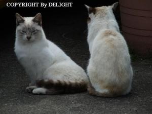 近所の猫達