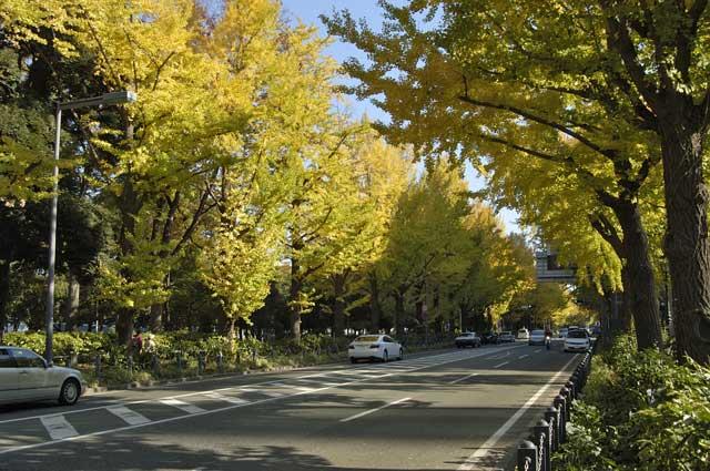 山下公園 紅葉