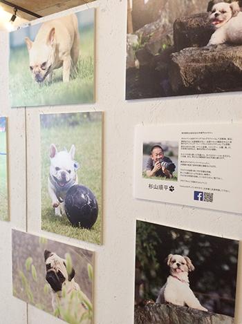 動物カメラマンさんのお写真