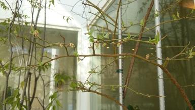 平成28年3月花の芽
