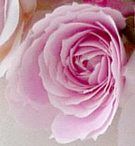 手作りの造花の画像.布花.染め花.ピンク.花冠..ウェディング