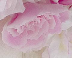 花冠着用写真+ピンク+バラ+染め花+ウェディング