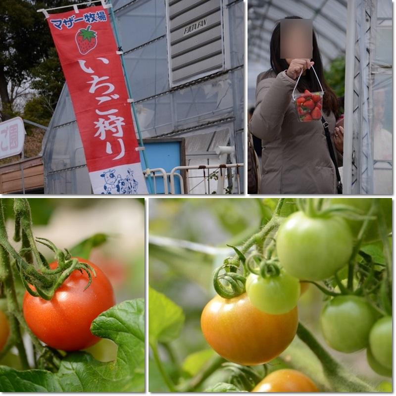 いちご&トマト