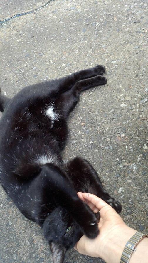 バンコクの屋台街の猫ちゃん3