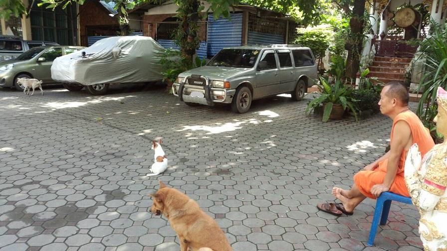 ミーママの大好きなタイの寺院には、飼い主のいない犬がたくさん連れてこられ、お坊さんや住人達がご飯をあげています1