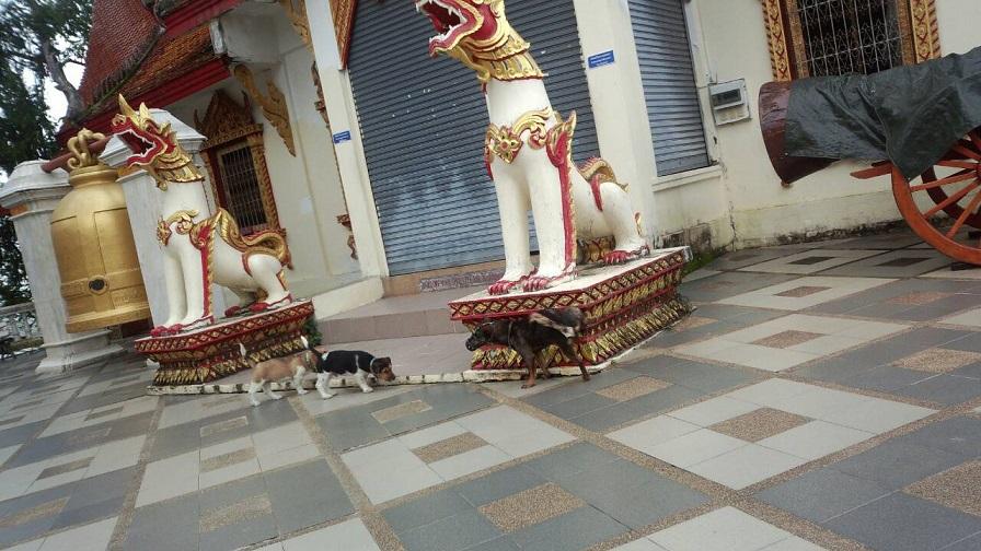 寺院のワンちゃん達2