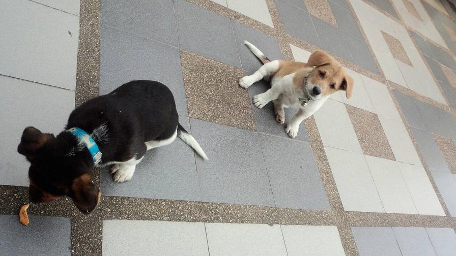 寺院の子犬達