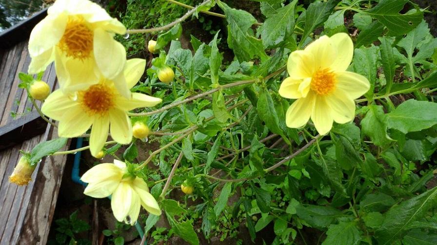熱帯のお花3