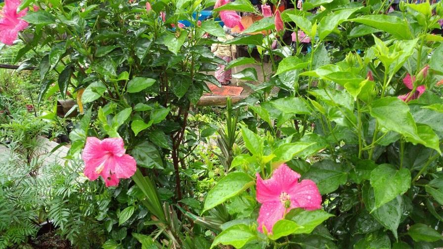 熱帯のお花5